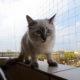 Siatki na balkon dla kota, przeci ptakom